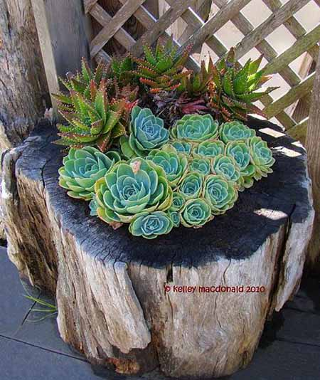 Old Tree Stump Ideas (16)