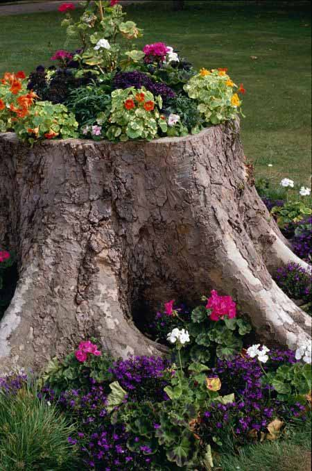 Old Tree Stump Ideas (25)
