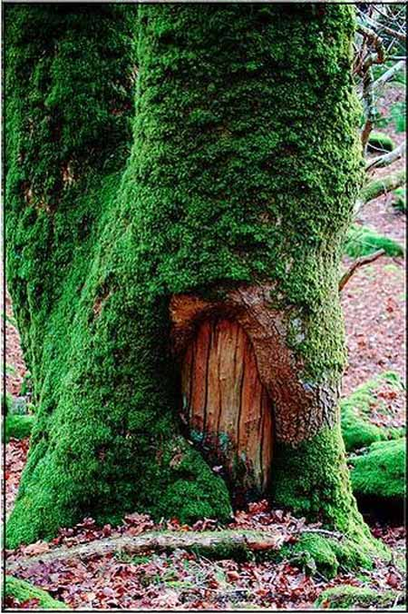 Old Tree Stump Ideas (28)