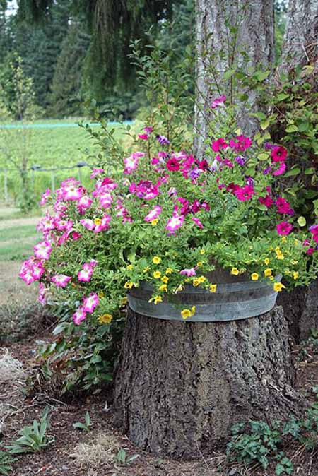 Old Tree Stump Ideas (3)