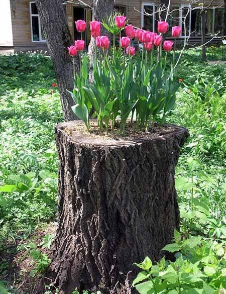 Old Tree Stump Ideas (30)