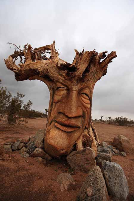 Old Tree Stump Ideas (4)